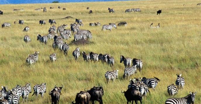 Национальные парки и заповедники Африки