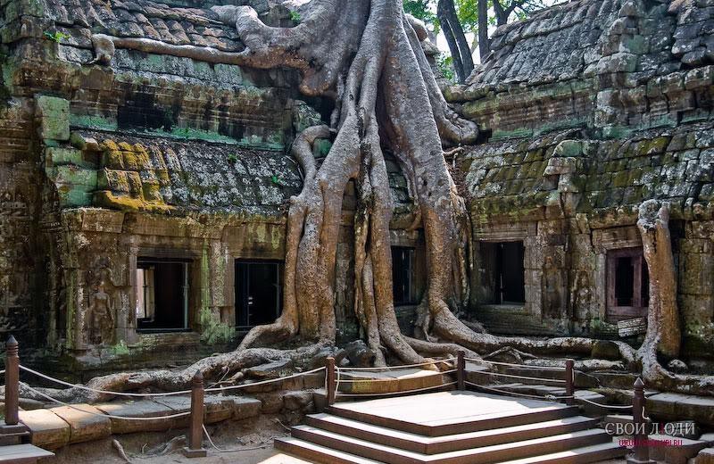 они всегда фото замков в индии проросших деревьями двухкомнатную квартиру косметический
