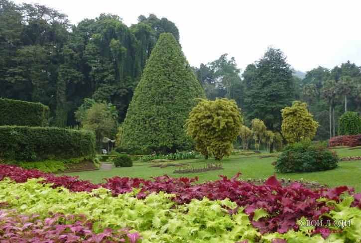 Ботанический сад шри ланка