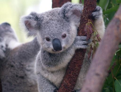 Парк коал мельбурн австралия