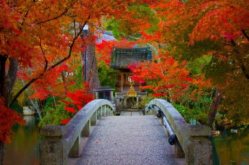 Цветение сакуры момидзи и другие