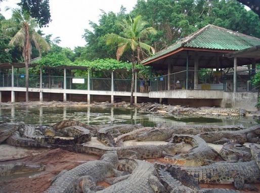 Крокодиловая ферма в Ко Чанге, Таиланд