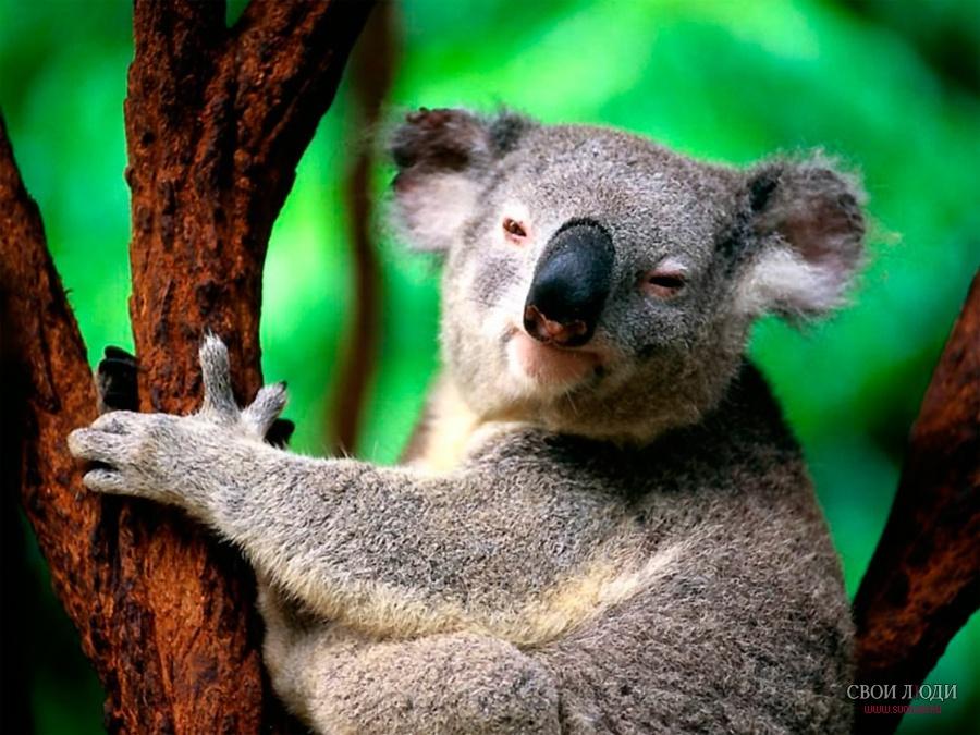 Рептилии австралии