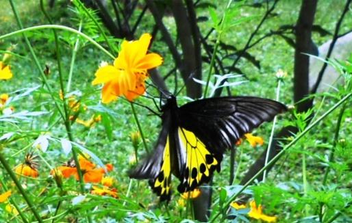 «Парк бабочек» в Таман-Купу-Купу, Индонезия