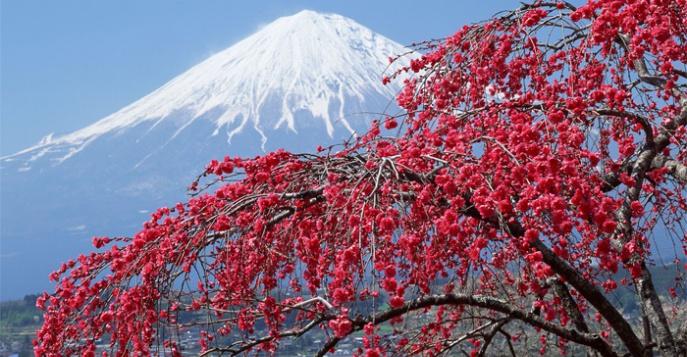 Япония когда там цветёт сакура